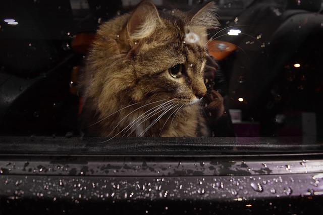 kočka za oknem.jpg
